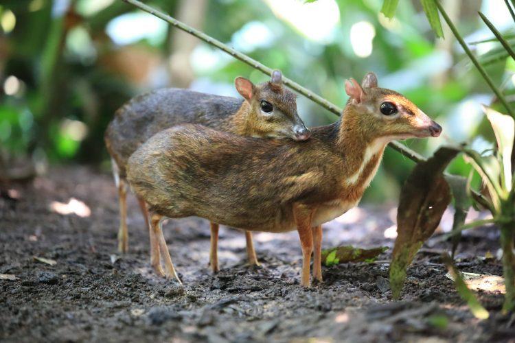 Cần bảo vệ nhiều loài động vật hoang dã trong đó có Cheo Cheo