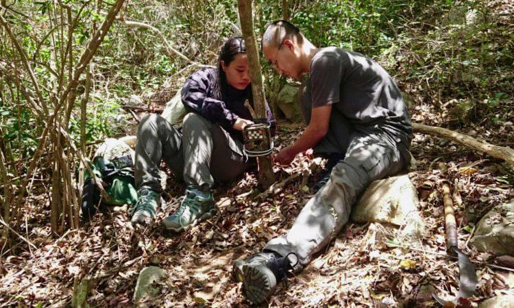 Các nhà khoa học đang thực hiện bẫy máy ảnh Cheo Cheo lưng bạc