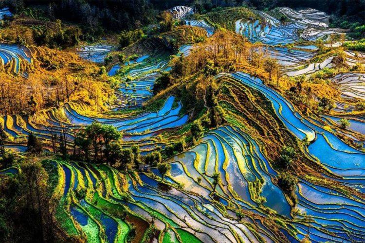 Ruộng bậc thang Nguyên Dương