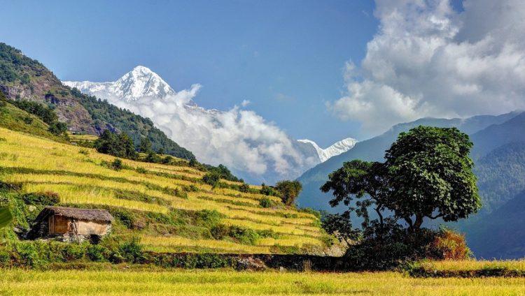 Ruộng bậc thang Annapurna